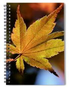 Summer Japanese Maple - 2 Spiral Notebook
