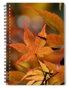 Summer Japanese Maple - 3 Spiral Notebook