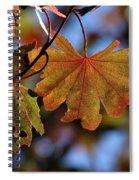 Summer Japanese Maple - 4 Spiral Notebook
