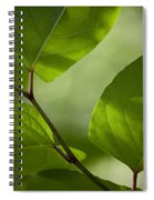 Summer Leaves Spiral Notebook