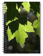 Summer Maple Leaves Spiral Notebook