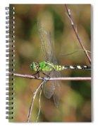 Summer Pondhawk Dragonfly Spiral Notebook