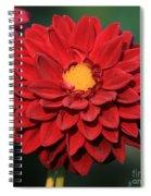 Fiery Red Dahlia Spiral Notebook