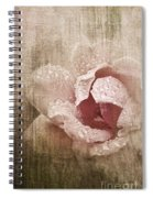 Summer Rose #1 Spiral Notebook