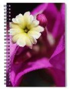 Summer Song Spiral Notebook