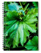 Summer Squash Leaves Spiral Notebook