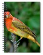 Summer Tanager Changing Color Spiral Notebook