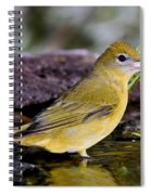 Summer Tanager Female In Water Spiral Notebook