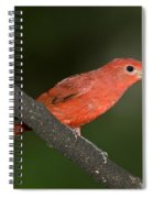 Summer Tanager Male Perched-ecuador Spiral Notebook