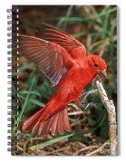 Summer Tanager Piranga Rubra Landing Spiral Notebook