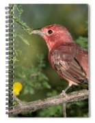 Summer Tanager Piranga Rubra Spiral Notebook