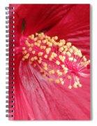 Summerific Cranberry Crush 01 Spiral Notebook
