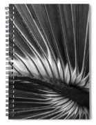 Summers Fan Spiral Notebook