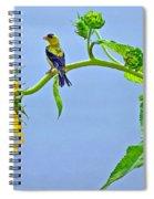 Summertime Songs Spiral Notebook