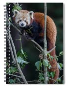 Sumo Posing In Tree Spiral Notebook