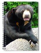 Sun Bear - 09515-1 Spiral Notebook