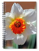 Sun Burst Spiral Notebook