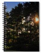 Sun Burst Through The Trees Spiral Notebook