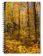 Sun Dappled Autumn Forest  Spiral Notebook