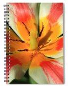 Flower Of Velvet Spiral Notebook