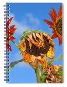 Sun Drenched In Autumn By Diana Sainz Spiral Notebook