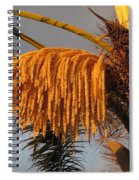 Sun Glowing Palm Spiral Notebook