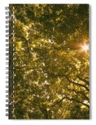 Sun In The Trees Spiral Notebook