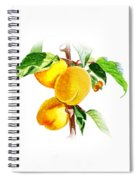Sun Kissed Apricots Spiral Notebook