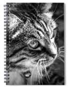 Sun Kissed Kitty Spiral Notebook