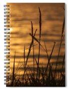 Sun Kissed  Spiral Notebook
