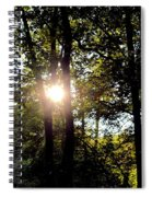 Sun Kissed Trees Spiral Notebook