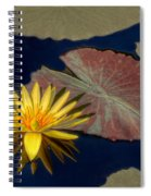 Sun-kissed Water Lily Spiral Notebook