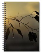 Sun Leaves Spiral Notebook