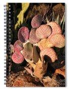 Sun On Cactus Spiral Notebook