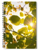 Sun Shining Through Leaves Spiral Notebook