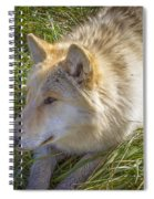 Sun Soak Spiral Notebook