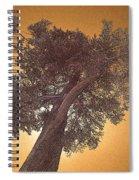 Sun Tree Spiral Notebook
