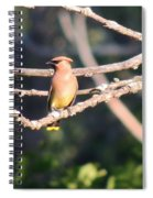 Sunbathing Cedar Waxwing  Spiral Notebook