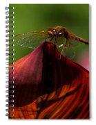 Sunbathing Dragonfly Spiral Notebook