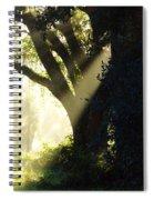 Sunbeam Tree Spiral Notebook