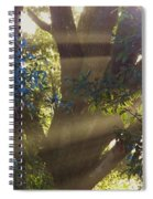 Sunbeams In The Tree Spiral Notebook