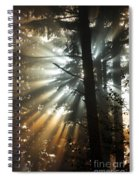 Sunbeams Through Trees Spiral Notebook