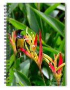 Sunbird On Heliconia Ginger Flowers Singapore Spiral Notebook