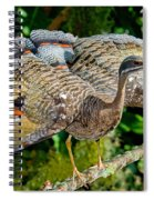 Sunbittern Displaying Spiral Notebook
