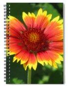 Sunburst 03 Spiral Notebook