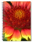 Sunburst 05 Spiral Notebook