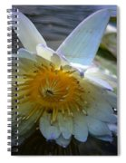 Sundown At Lotus Pond Spiral Notebook