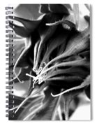 Sunflower Beginning Spiral Notebook