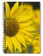 Sunflower Blossom Spiral Notebook