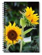 Sunflower Duo Spiral Notebook